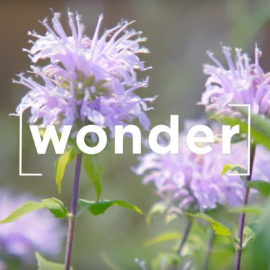 """Hans Urs von Balthasar quote on wonder: """"Every experience of beauty points to eternity."""""""